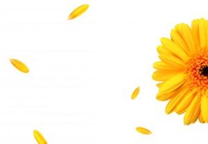 flower-1312923
