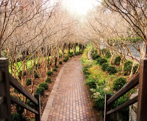 pathway-1309303